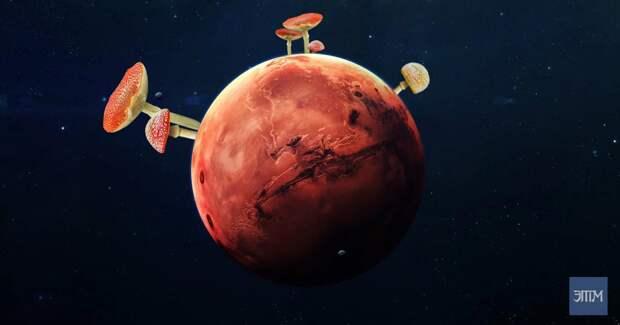 Грибы на Марсе: скандал среди ученых