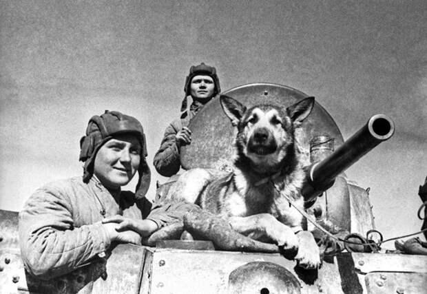 Чем знаменита собака, для которой Сталин отдал свою шинель? вов, история, собака