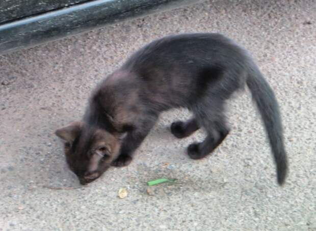 Помогите котятам пока не поздно — приютите их на время или навсегда, - спасите им жизнь!