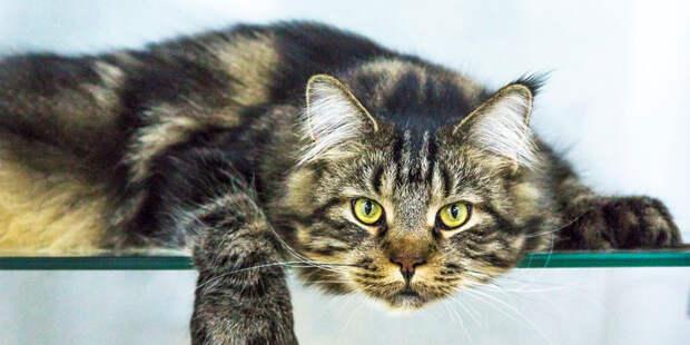 Девять жизней: В Иркутске при пожаре спасли кота