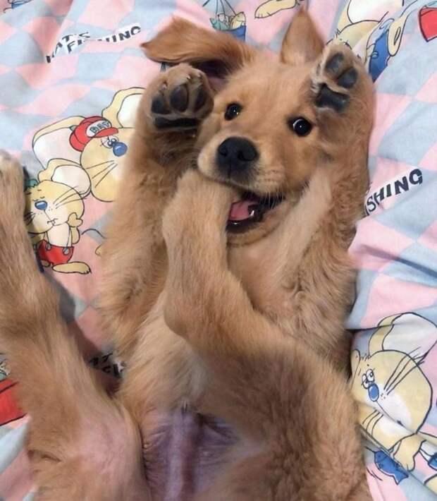 20  смешных животных, которые делают что-то не так, как все