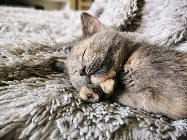 Почему кот спит на человеке? 5 причин: от нехватки тепла, до желания нюхать пот хозяина