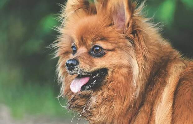 Избившего до смерти собаку крымчанина посадят за решетку