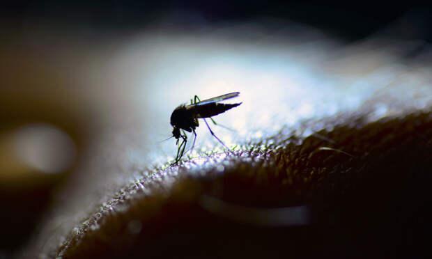 Почему одних комары кусают, а других – нет?
