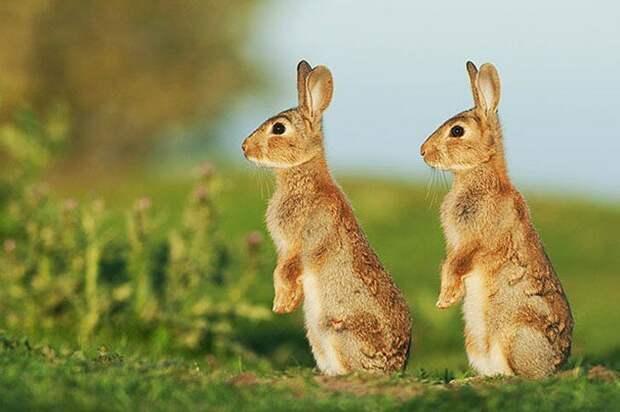 25 животных-близнецов, которые не оставят вас равнодушными животные, интересное, фотографии