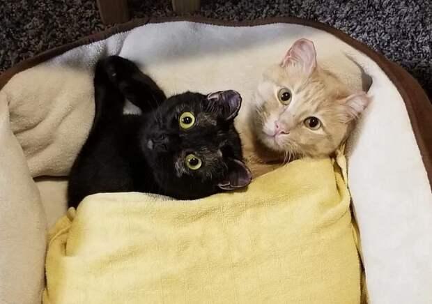 коты отдыхают