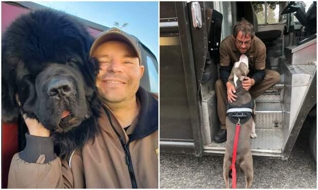 30 милых фото о любви собак к курьерам
