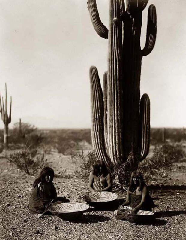 Женщины собирают фрукты кактуса Сагуарос.