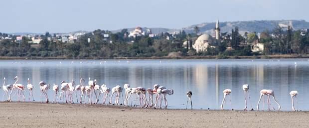 Берег фламинго Кипр