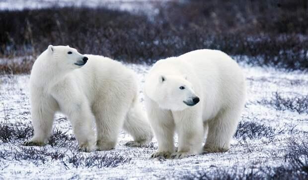 Фотовыставка натему «Хозяин Арктики— 2021» пройдет 22сентября