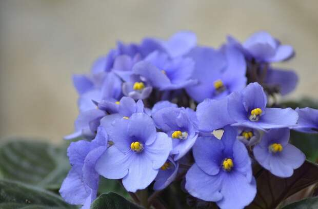 цветок по знаку зодиака