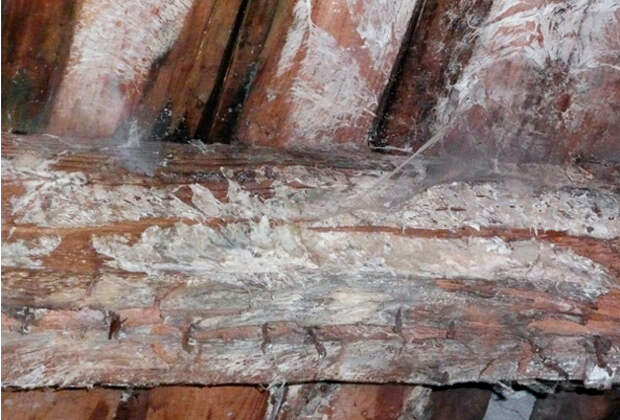 Плесень под полом (грибок в подполье) дома: как избавиться?