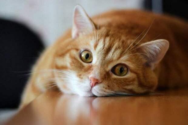 ТЕРЕМОК. Что должен делать кот