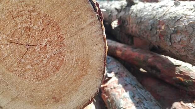 Упавшее дерево убрали с дороги на улице Свободы
