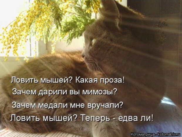 1556890766_kotomatricy-8 (500x375, 158Kb)