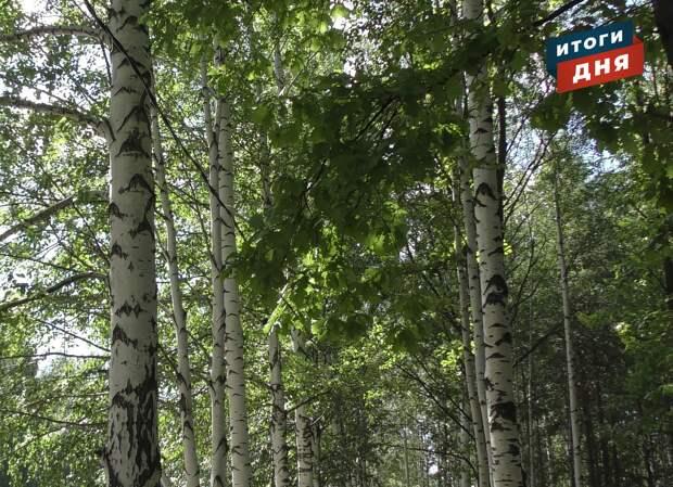 Итоги дня: сдача лесов в Удмуртии в аренду, рост числа утонувших и прогноз погоды