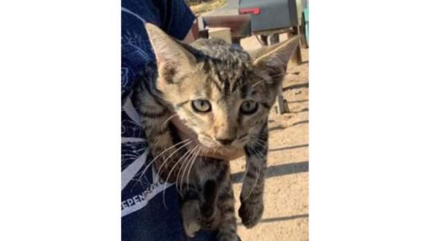 Девушка спасла котенка с грустным «лицом». Посмотрите на него сейчас!