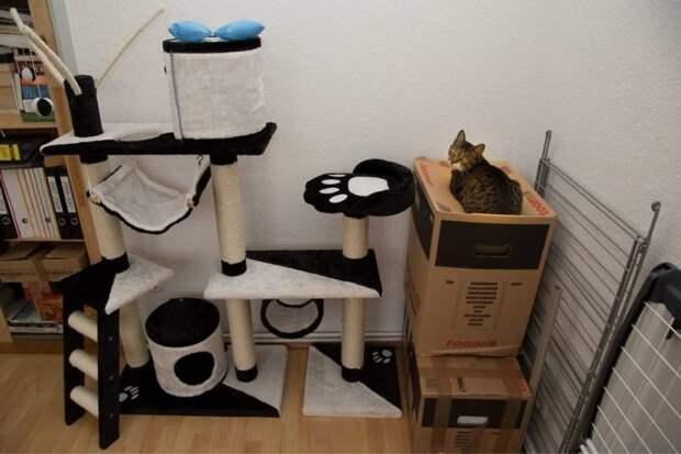 Кот лежит на коробке