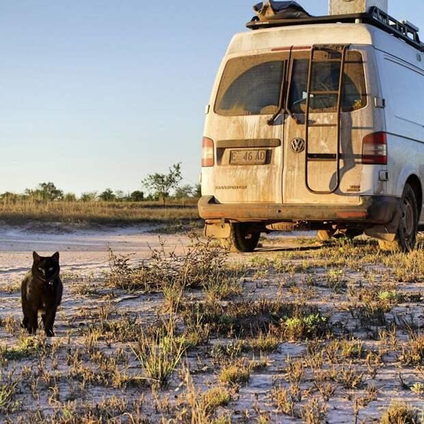 Путешественники не собираются останавливаться, и продолжают покорять новые захватывающие места! австралия, коты, мило, природа, путешествия, туризм, фото, фургон