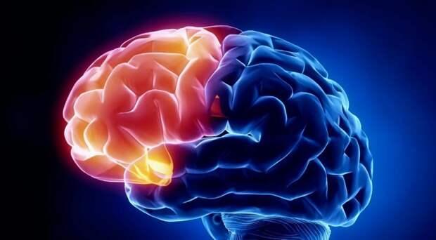 Изучение иностранных языков повышает активность головного мозга