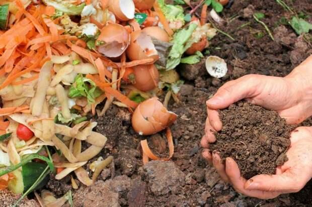 Фото: © gardeningknowhow.com
