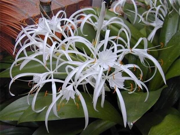 Любителям эзотерики! Магия растений