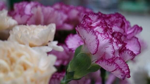 Мэр Казани пришел с цветами к стихийному мемориалу у школы на костылях