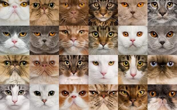 Тест: выбранная кошка расскажет об особенностях вашего характера