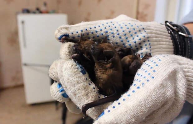 Около 250 летучих мышей приютила жительница Воронежа