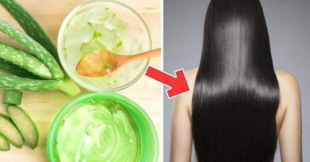 Алоэ для волос: домашние средства для локонов