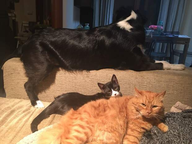 """""""Дорогая, вот тебе третий кот!"""" Лохматые друзья больше не плачут – они уплетают итальянскую пасту!"""
