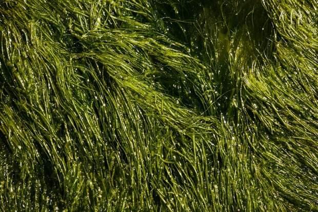 Личинки и водоросли могут стать устойчивыми закусками будущего.