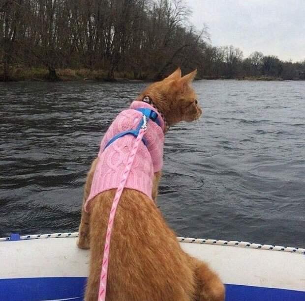 Коты путешественники