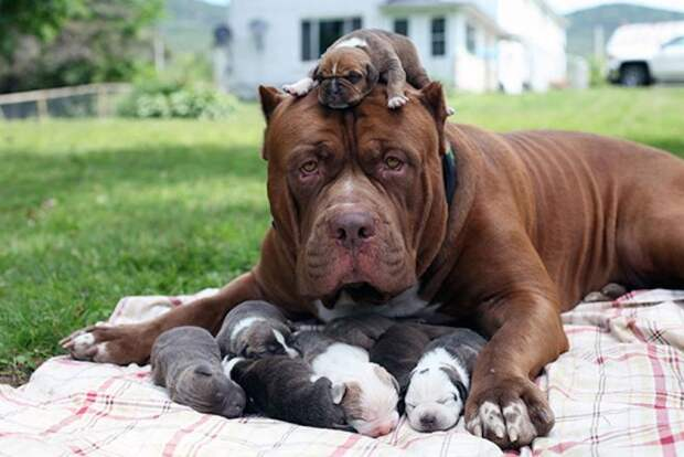 пес и щенки