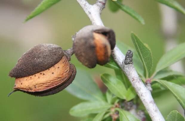 Популярные орехи, от которых больше вреда чем пользы