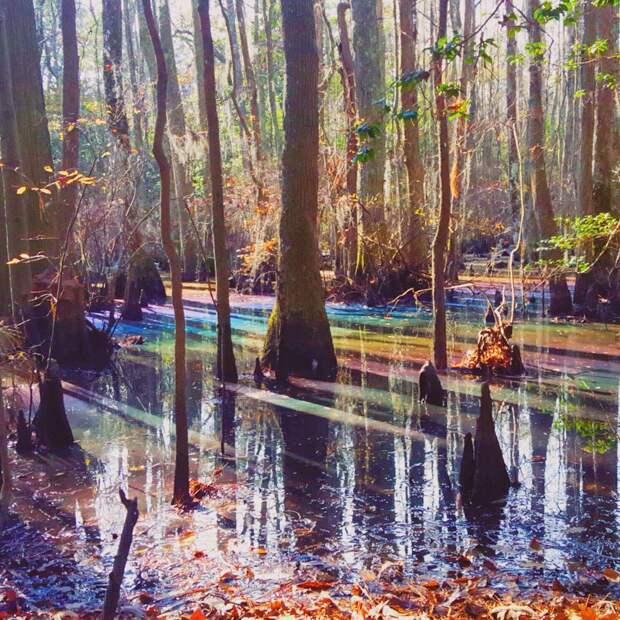 6 радужных фото разноцветного болота