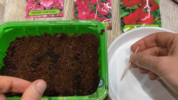 Простой и действенный способ посева петунии в феврале, что бы быть все лето с цветами