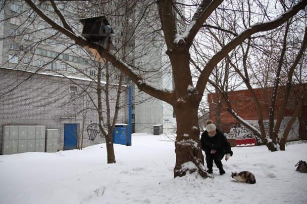 Коты Левобережного стали селиться на деревьях