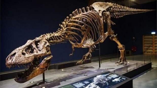 Ученые назвали число населявших Землю тираннозавров