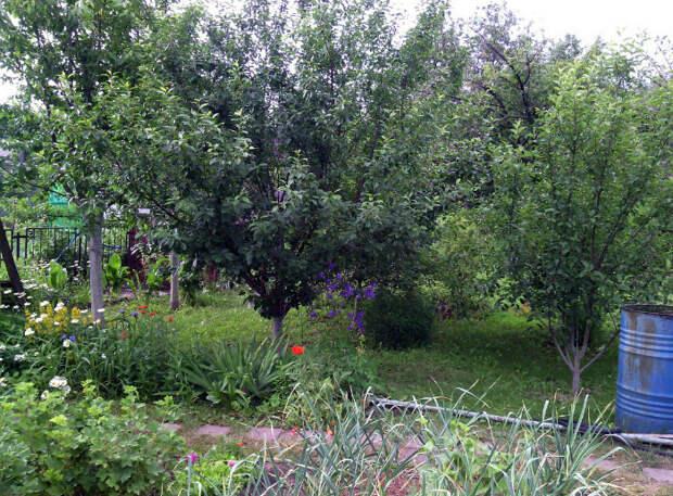 Не сажайте слишком «пышные» деревья.   Фото: Асиенда.ру.