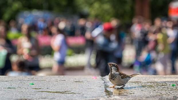 В Первомайском сквере на Ивана Купала замечен был воробей, он обливал кого попало... Фото: Андрей ПОЛЯКОВ