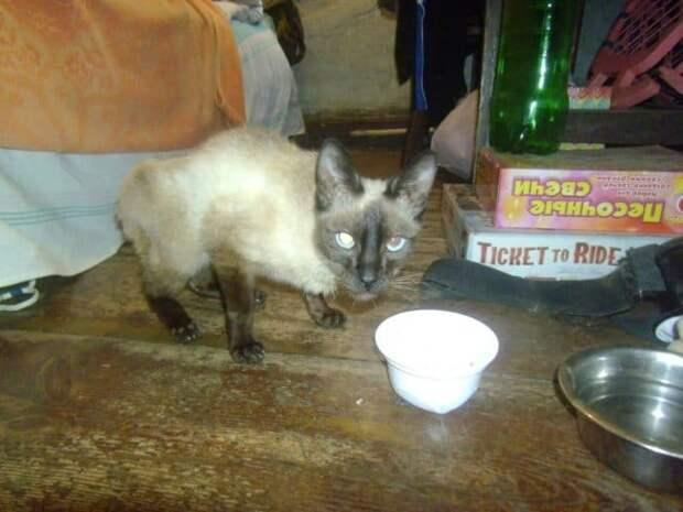 Стекло и куски мусора торчали в запутанной шерсти кошки. Она не могла открыть глаза
