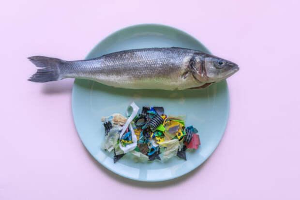 Ученые разработали экопластик из рыбьих отходов...