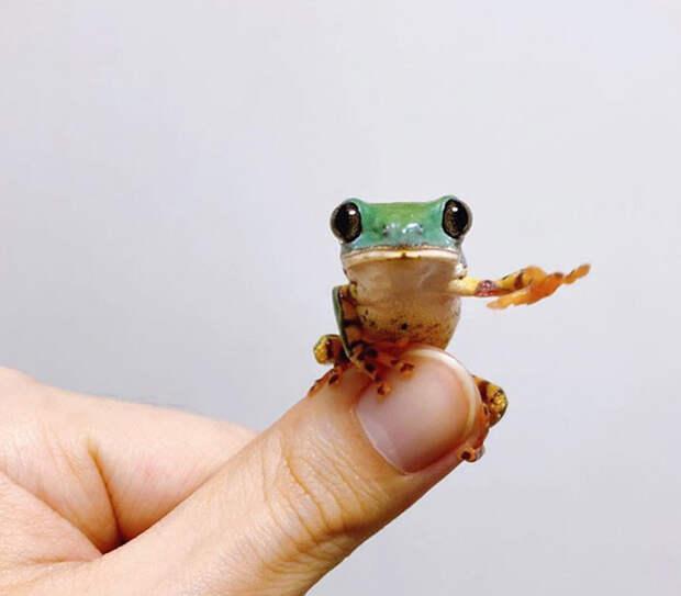Забавные снимки с лягушками заряжают позитивом