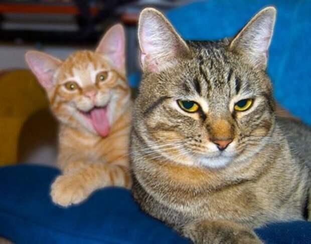 Убойные истории, которые произошли с котиками и их хозяевами