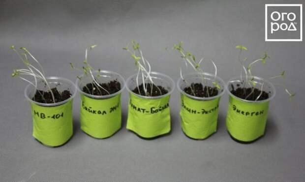 Лучшие стимуляторы роста для растений