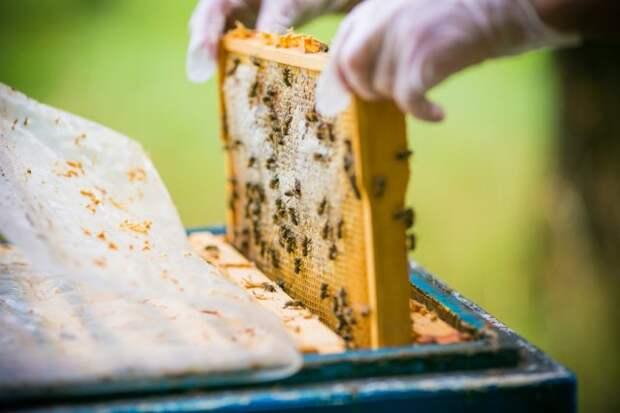 рамка медовая