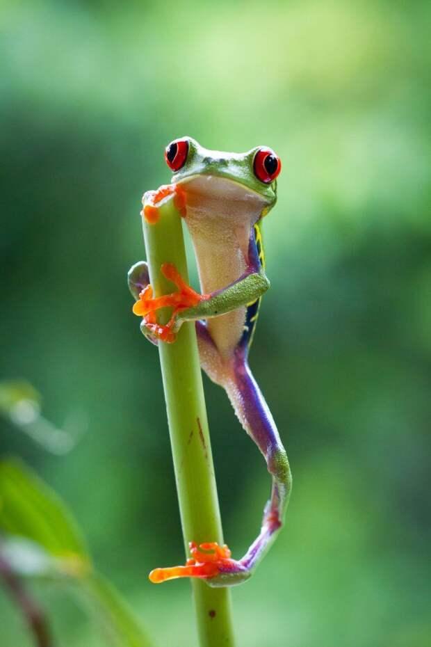 Позитивный мир дикой природы для настроения (10 фото)