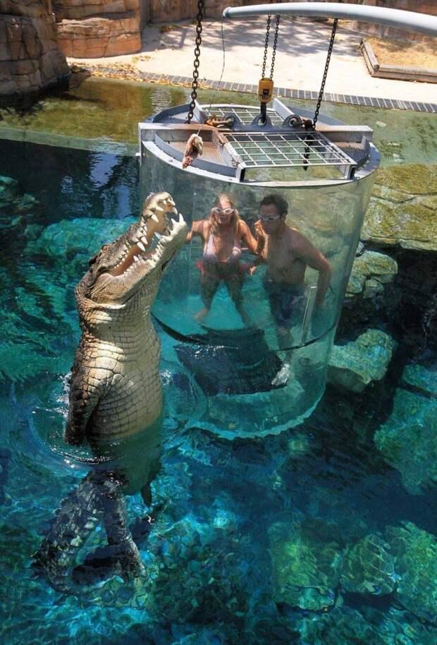 Наблюдают за крокодилом