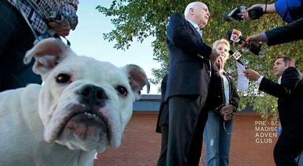 Государственные деятели и их собаки